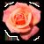flor-consulta